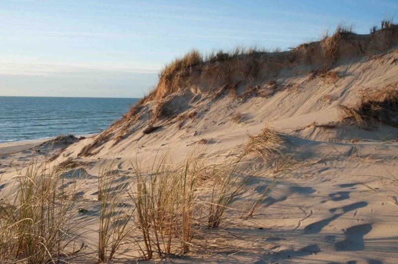 La dune plantée d'oyats constitue un rempart naturel face à l'érosion